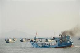 Từ 20/3, Bình Thuận không cho phép đóng mới tàu cá làm nghề giã cào