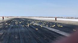 'Mưa' vàng hàng tấn bất ngờ rơi từ trên trời xuống sân bay Nga