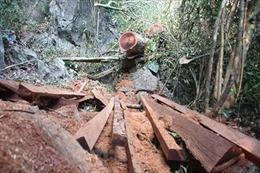 Phát hiện gần 143 m3 gỗ quý hiếm bị chặt hạ tại rừng đặc dụng Phong Quang