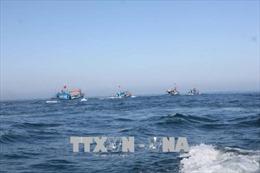 Tuyên truyền, vận động ngư dân không vi phạm vùng biển nước ngoài