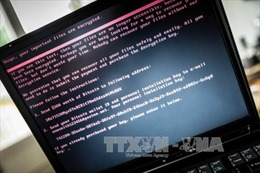 Khoảng 8/10 máy tính cài đặt phần mềm trôi nổi có nguy cơ nhiễm virus