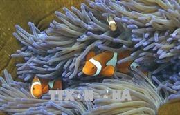 Thử nghiệm thành công lá chắn bảo vệ san hô