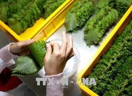 Xuất khẩu rau quả hy vọng kỳ tích mới