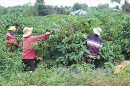 Vỡ nợ ký gửi nông sản ở Gia Lai
