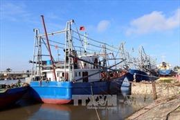 Áp dụng biện pháp mạnh đối với tàu cá đánh bắt bất hợp pháp