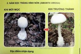 Vụ ngộ độc nấm ở Hà Giang: Người sống sót chưa chắc sẽ hồi phục hoàn toàn
