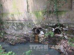 Long An phát hiện cơ sở giết mổ xả nước thải chưa qua xử lý