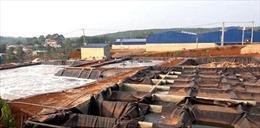 Bình Phước: Đình chỉ 6 tháng công ty chế biến mủ cao su gây ô nhiễm môi trường