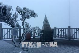 Sa Pa lạnh 5,2 độ C, băng giá phủ trắng đỉnh Fansipan