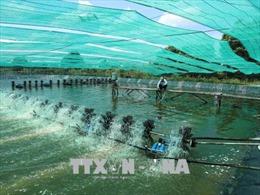 Quyết liệt khắc phục tình trạng thủy sản bị trả về