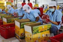 Căng thẳng thương mại Mỹ-Trung tác động không nhỏ tới xuất khẩu của Việt Nam