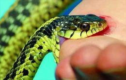 Làm rõ thông tin bác sĩ tắc trách khiến bệnh nhân bị rắn cắn tử vong ở Sóc Trăng