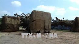 Trả lại cây đa sộp thứ 3 bị bắt giữ ở Thừa Thiên - Huế