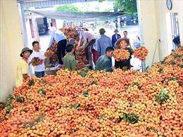 Kết nối tiêu thụ và sản xuất nông sản an toàn