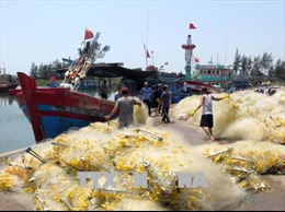 Nhiều tàu cá nằm bờ vì thiếu lao động