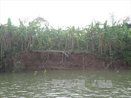 Cát tặc móc ruột lòng sông, ruộng đồng bị xóa sổ