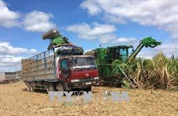 Vực dậy ngành mía đường trong nước - Bài cuối: Cạnh tranh công bằng và giải pháp liên kết chuỗi