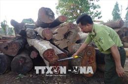 Mở rộng điều tra vụ bắt giữ 2 xe gỗ quý không rõ nguồn gốc