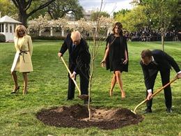 Cây sồi Tổng thống Pháp trồng tại Nhà Trắng bỗng nhiên 'mất tích'