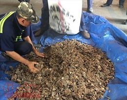 Bắt giữ 3,3 tấn vảy tê tê nhập lậu trong vỏ bọc hạt điều