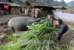 Tín dụng chính sách giúp đồng bào dân tộc thiểu số Lai Châu phát triển kinh tế