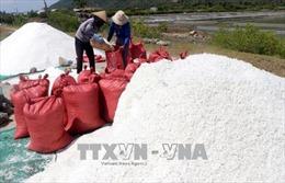 Được mùa nhưng rớt giá, diêm dân Phú Yên bỏ hoang nhiều ruộng muối
