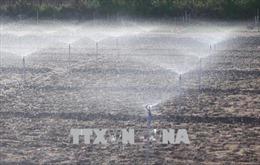 Áp dụng công nghệ tưới tiết kiệm, ứng phó với khô hạn tại Ninh Thuận