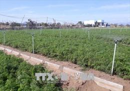 Nông nghiệp thông minh – Bài 2: Hướng đến nông nghiệp xanh