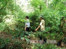 Chuyển gần 40 ha rừng sang thực hiện 4 dự án tại Tây Ninh