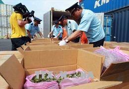 Hải Phòng thu giữ container chứa khoảng 2,5 tấn lá Khát