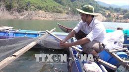 Hiệu quả nuôi cá lồng bè của đồng bào Kor, Quảng Ngãi