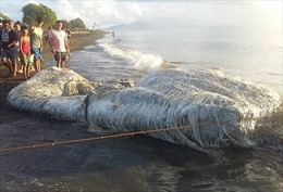Người dân hoang mang với xác sinh vật kỳ dị chưa từng thấy dạt vào bờ biển Philippines
