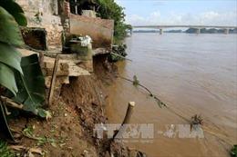 Cần sớm khắc phục tình trạng sạt lở nghiêm trọng bờ sông Thao, huyện Tam Nông