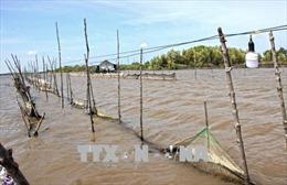 Cà Mau: Đề nghị cách chức Chủ tịch UBND xã tự ý cho dân thuê đất bãi bồi