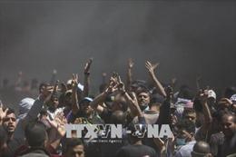 Kêu gọi điều tra độc lập về tình hình bạo lực tại Dải Gaza