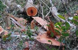 Phát hiện vụ phá gần 20ha rừng tại Đắk Lắk