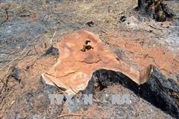 Truy cứu trách nhiệm hình sự đối tượng xâm hại rừng