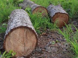 Vụ phá trắng gần 20ha rừng ở Đắk Lắk: Chủ rừng và bảo vệ rừng 'không hề hay biết'