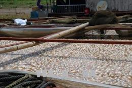 Nguyên nhân cá chết trên sông La Ngà là do sự biến đổi môi trường nước