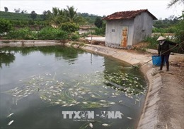 Đã xác định nguyên nhân cá chết bất thường tại Kon Tum