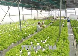 Việt Nam – Hà Lan sẽ hợp tác trong ứng dụng và phát triển công nghệ sau thu hoạch