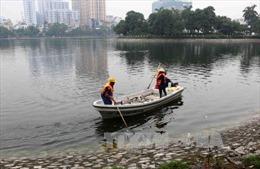 Thu gom gần 200kg cá chết tại hồ Hoàng Cầu, Hà Nội