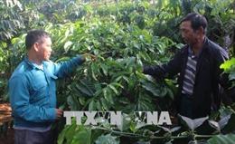 Hiến 4.000m2 đất cho phong trào xây dựng nông thôn mới ở Đắk Nông