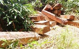 Vụ gỗ đè chết người tại Đăk Tô: Xác minh nguồn gốc gỗ