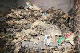 Tuyên án 4,5 năm tù cho đối tượng buôn bán 6.600 xác rùa biển