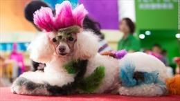 Người dân Trung Quốc 'phát sốt' với trào lưu nuôi chó, mèo