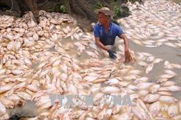 Hơn 1.500 tấn cá bè chết trên sông La Ngà do thiên tai