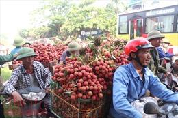 Nhộn nhịp mua bán vải thiều Lục Ngạn, Bắc Giang