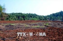 Hai doanh nghiệp tự ý san ủi 3,58 ha đất rừng