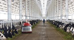 Vinamilk nhập lô bò A2 thuần chủng đầu tiên từ New Zealand